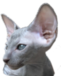 chaton bleu_c72 - copie.png