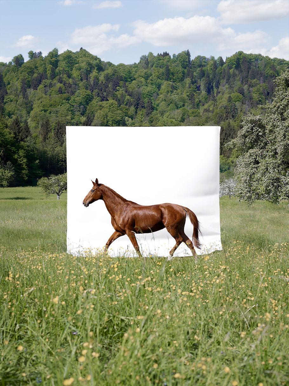 Horse shooting - Whitney 2018