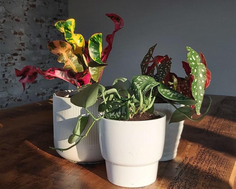 trio%20plants_edited.jpg