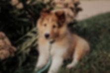Nessie 8 weeks-1.jpg