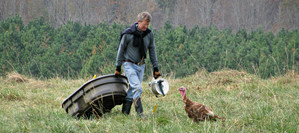 Tom and Turkey 980 X 436.jpg