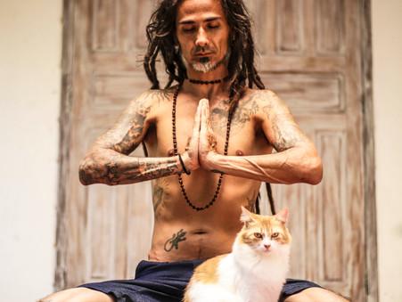 O Tantra diz: Aprenda com os gatos