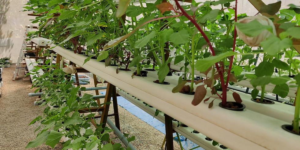 Online hydroponics session