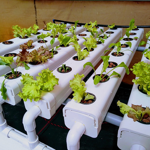 NFT (Nutrient Film Technique) System - 32 Planter