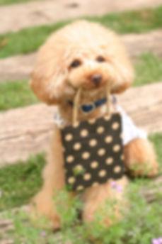 栃木県 犬のしつけ HappyFriends