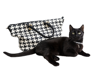 Cat%20and%20Purse_edited.png