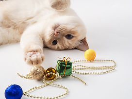 iStock-Cat nifty finds.jpg