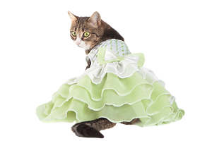 Cat%20in%20Green%20dress_edited.png