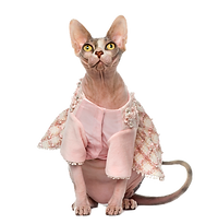 Cat%20in%20frilly%20top_edited.png
