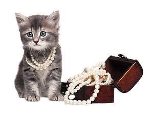 Jewelry%20Cat%20png_edited.png