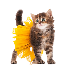 iStock-cat%20in%20skirt_edited.png
