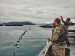 Sea duck hunt PWS