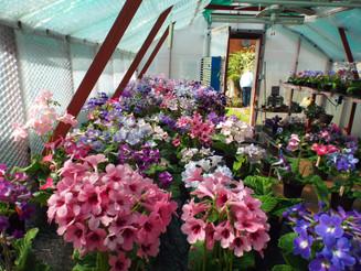 Look inside Frank's greenhouses