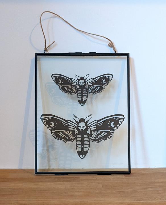 Deathshead hawk moths