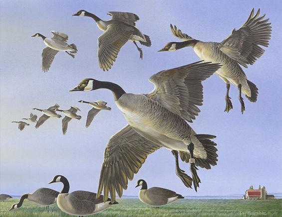 thumbnail_03b WA Duck Stamp 2020.jpg