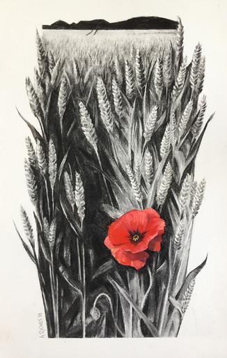 Wheat field - Blankney, Lincolnshire