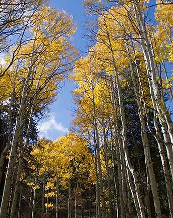 Gila-County-Fall-Colors_pinalmountains2.