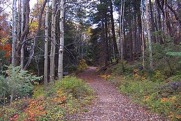 Trails_Ferndell Trail 204.jpg