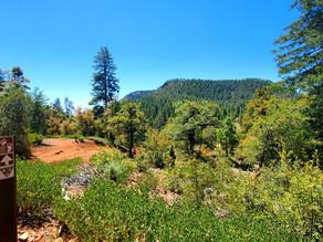 Bear Foot Trail - Pine, Arizona