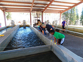 Raising Trout at the Tonto Fish Hatchery