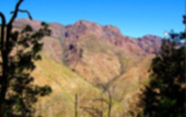 Trails_DaveGowenTrail.jpg