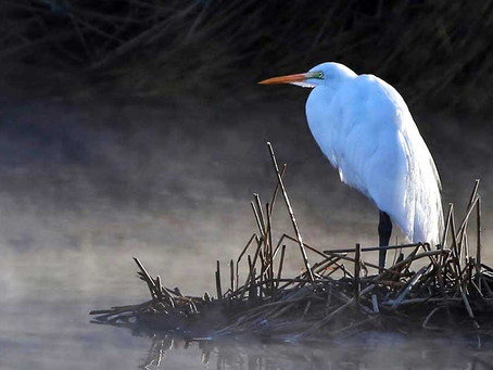 5 BEST places to go Birding in Gila County near Payson, Globe and Roosevelt Lake.