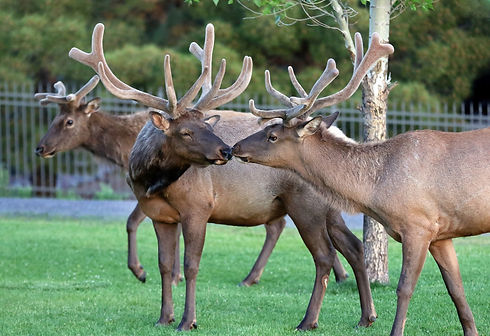 Wildlife in Payson, Arizona