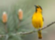 Birding_GilaCounty_PinalMountains.jpg