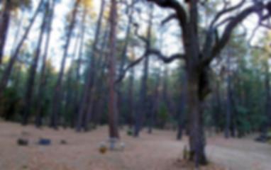 Trails_ValentineTrail.jpg