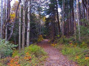 Trails_Ferndell-Trail-.jpg