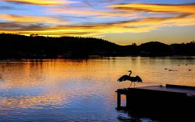 Birding Green Valley Park - Payon AZ