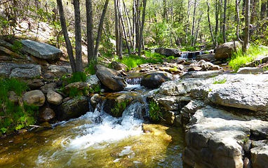 Trails_Hortoncreek_2.jpg