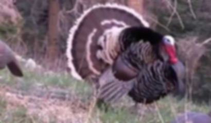 Hunting_GilaCounty_Turkey.jpg