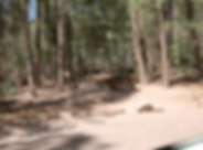 Sharpcreek-Campground-compressor.png