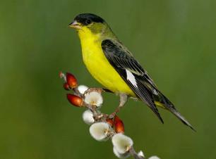 Birding_GilaCounty_Rooseveltlake.jpg