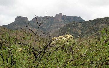 Trails_Tule-Canyon-Trail.jpg