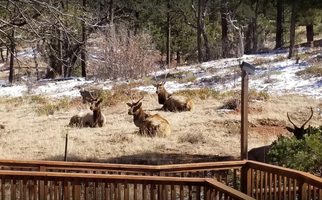Lazy Elk in Strawberry, AZ