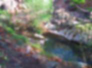 Streams_campgaincreek.jpg