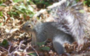 Hunting_Squirrel.jpg