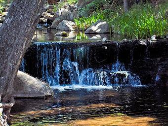Birding Gila County Washington Park