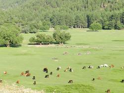 Little Green Valley