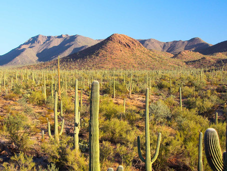Sonoran Desert in Gila County, Arizona