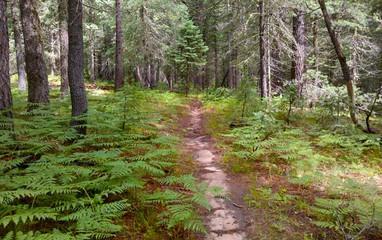 Trails_BabeHaughtTrail.jpg
