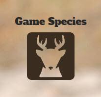 Hunting_gamespecies.jpg