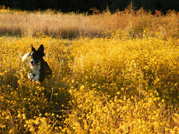 Canine Fun in Star Valley Arizona
