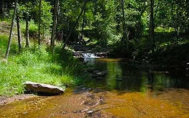 Trails_Hortoncreekspring.jpg