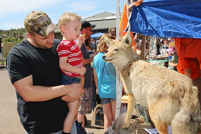 Payson Wildlife Fair