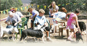 parks_rumseydogpark.jpg