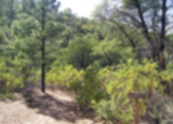 Trails_UnaDelOsoTrail.jpg