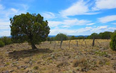 Trails_Saddleridgetraill.jpg